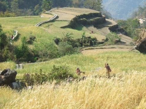 Trekking near Rishikesh