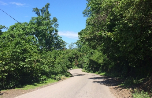 rishikesh-road.jpg