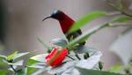 himalaya-bird-1
