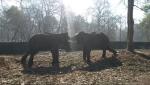 sohan tours safari