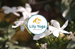 Lily Yoga Rishikesh header 3